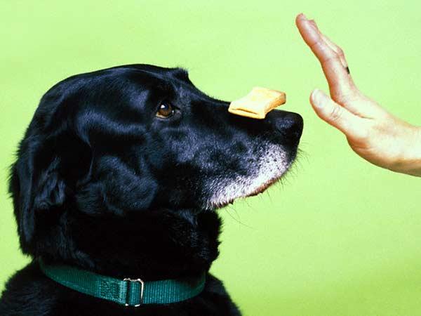 dog-training-tip
