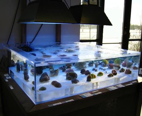first fish tank